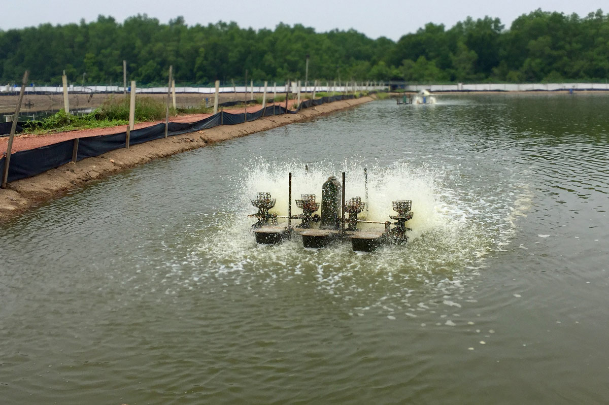 Shrimp pond with an aquaculture treatment pump