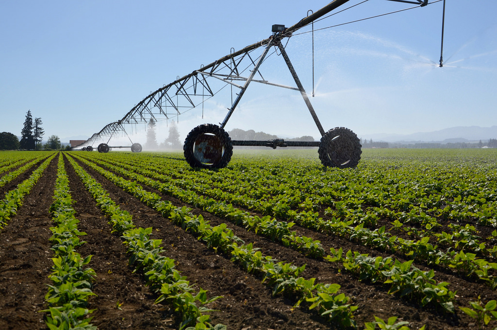 Food crop being irrigated with recycled water